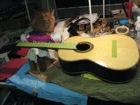 Papaya and guitar 2015