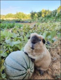 In the cantaloupe patch