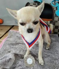 Civinek Second place at competitions in obedience regardless of their breed