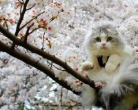 Cat in Flowering Tree