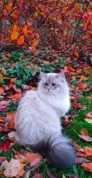 De herfstkat