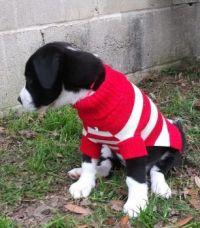 Lulu - red (& white) Where is Waldo Sweater