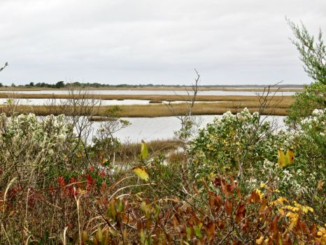 Marshes of Cape Cod