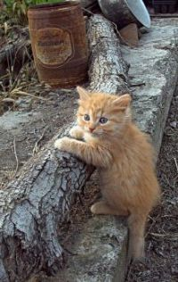 Rusty Drum and Ginger Kitten