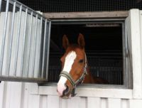 The head of my beautiful horse - just arrived at the new stable