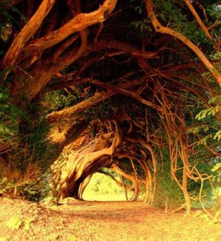 Yew Tree Tunnel, UK..
