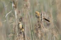 Birds in Poland.
