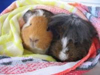 Piggies in a blanket