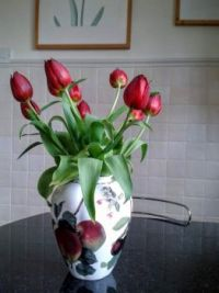Tulips in a Vase  (2)