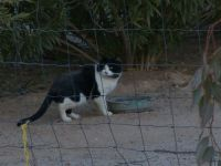 Morgan - finally got photo of feral tom cat 1-19-13
