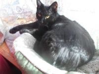 RAVEN RELAXING IN THE SUN