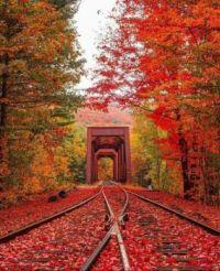 Journey to Autumn