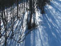 Bukve & sneg - Beech trees & snow