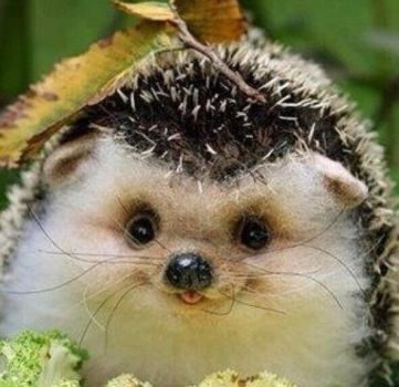 The world's hardest hedgehog (not)