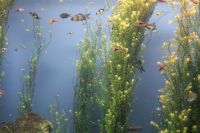 from the Georgia Aquarium