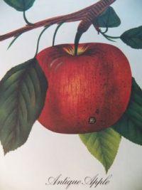 Antique Apple, 63 pieces