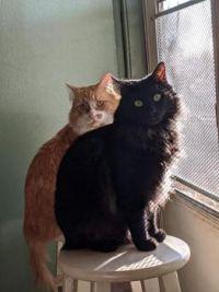 2 buddies