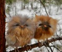 I thought you might need a couple of baby owls today