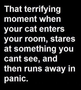 Scaredy cat 🙀