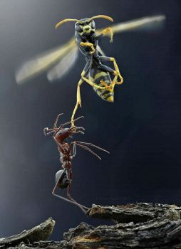 Ant vs. Wasp