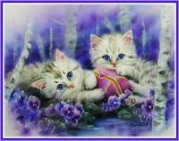 Kittens & Pansies