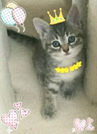 Here is Princess Kitten we Rescued in Concord, California July 4, 2016