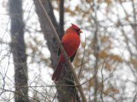 Birds in Central Park,  New York City,  USA