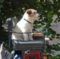 Carriage dog