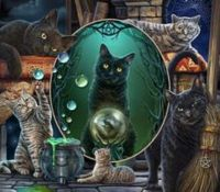 cats of the witchs