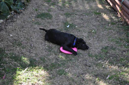 Maya & Frisbee
