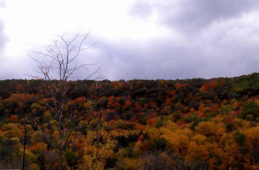 Autumn At Dusk In N.E.