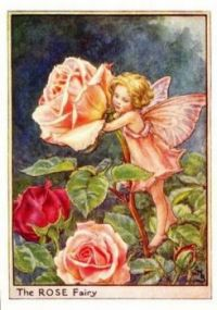 The rose fairy by cicely mary barker