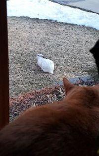 Cat TV: Bunny & Mango 2021Mar1-1