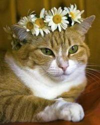 The cat princess