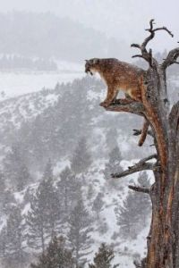 Cat on its perch