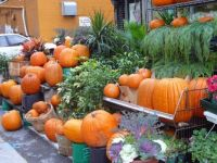 Pumpkins Anyone?