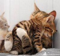 cute-cat-hug