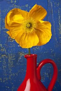 Yellow Poppy In Red Pitcher