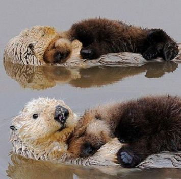Seaotters are pretty much the best.