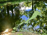 Reflections on a pond in a Japanese Garden