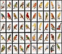 Bird cigarette cards!!