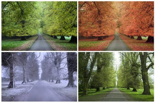 One road four seasons