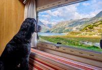 DOG ENJOYING THE VIEW