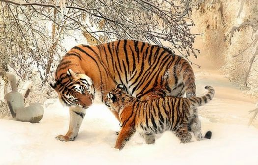 Tiger - Spending time with Dad!