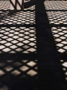 Trellis Shadows