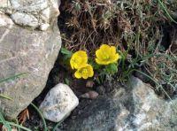 talovín - posel jara