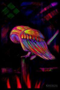 Trippy_Owl.