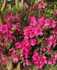 Spring in La.