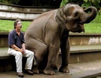 animals  elephant sitting down A