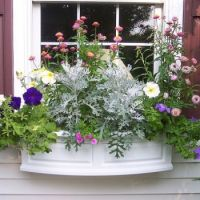 Mayne,Nantucket Window Box.